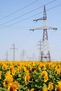 Utility lines with flowers